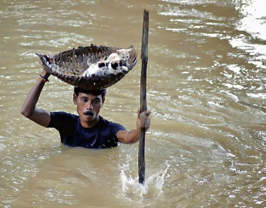 Man in India Rescues Kittens From Flood