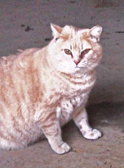 alpha-cat-2