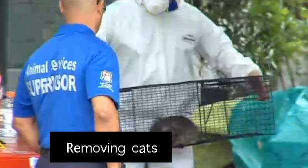 cat hoarder helped by neighbors1