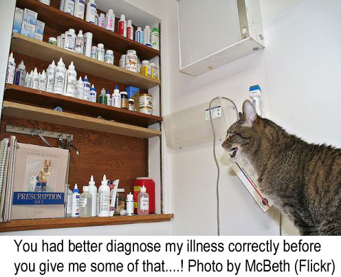 Cat illness diagnosis