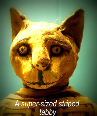 cat mummy: a large mackerel tabby cat