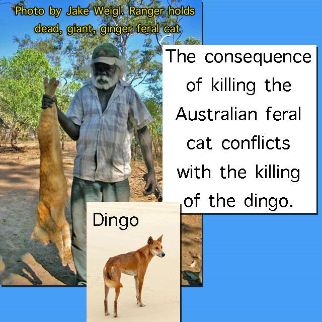 Killing feral cats australia