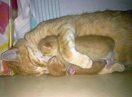 mother-love-picture