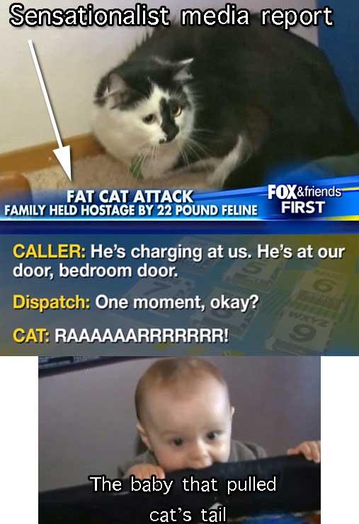 violent cat