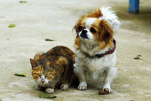 What Companion Animals are Considered Low Maintenance Pets