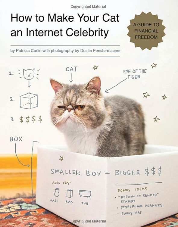 How to Make Your Cat an Internet Celebrity A Guide to Financial Freedom