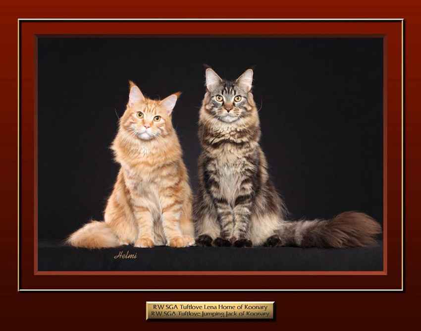 Maine Coons Lena and Jack. Photo copyright Helmi Flick.