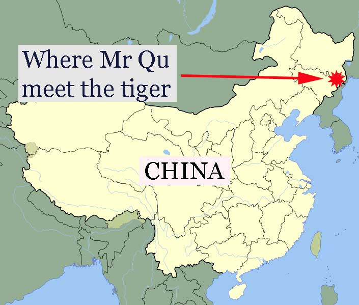 attack by injured Siberian tiger on a Chinese man
