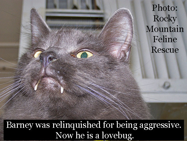 Barney a cat who was aggressive
