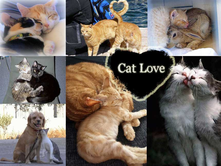 Cats love like people