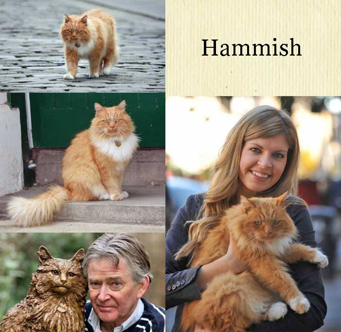 Hammish St Andrews celebrity cat