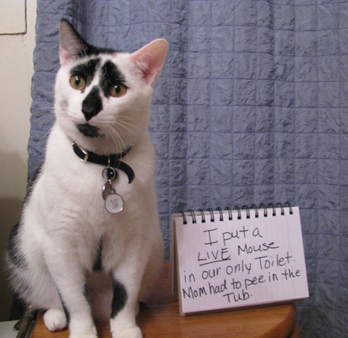 naughty cat in their own words10