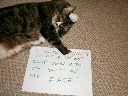 naughty-cat-in-their-own-words11