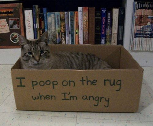 naughty cat in their own words12
