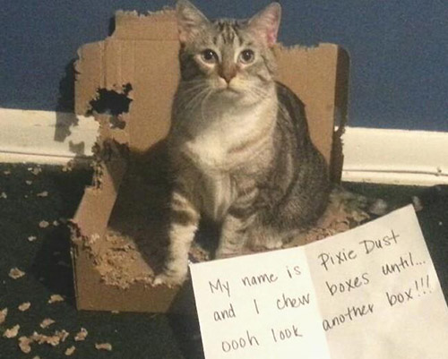 naughty cat in their own words17