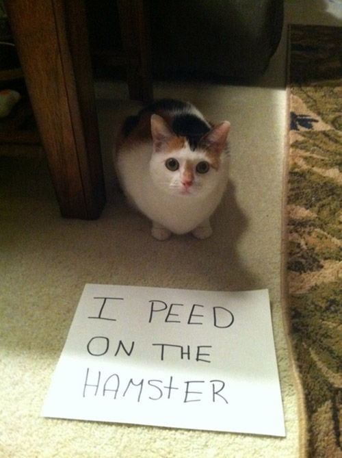 naughty cat in their own words19