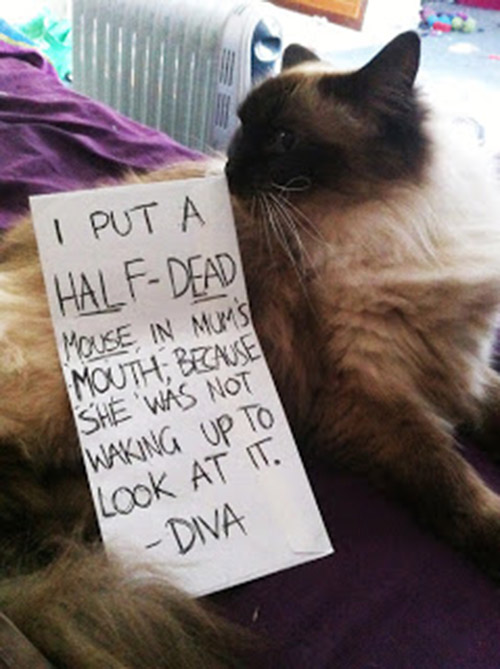 naughty cat in their own words21