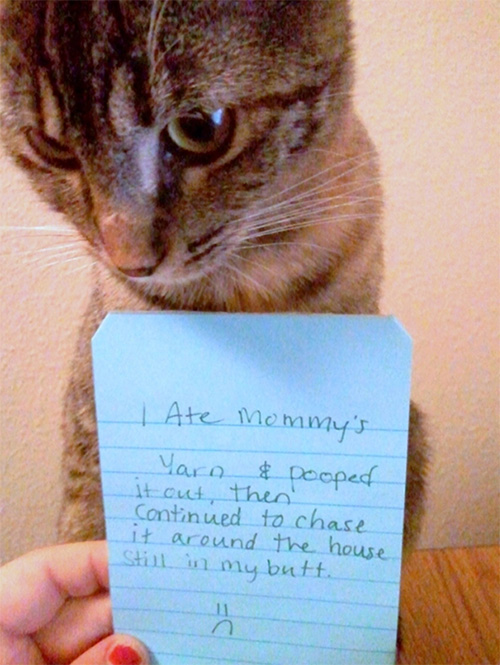 naughty cat in their own words4