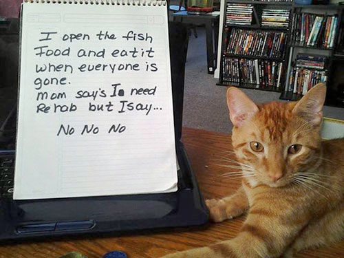 naughty-cat-in-their-own-words5
