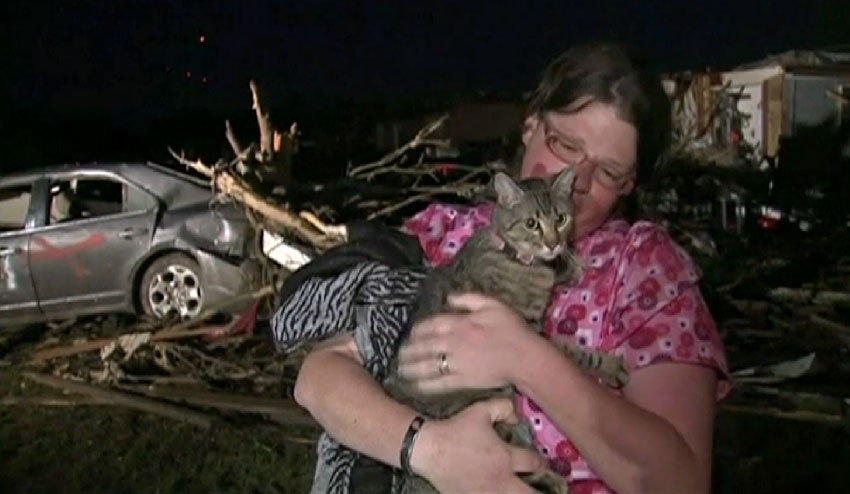 Picture of a tabby cat rescued from the Arkansas tornadoes 2014