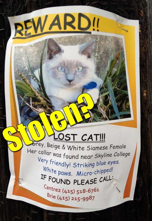 Stolen cat