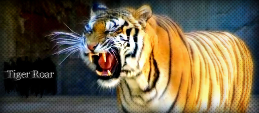Tiger roar facts for kidsTiger Image For Kids