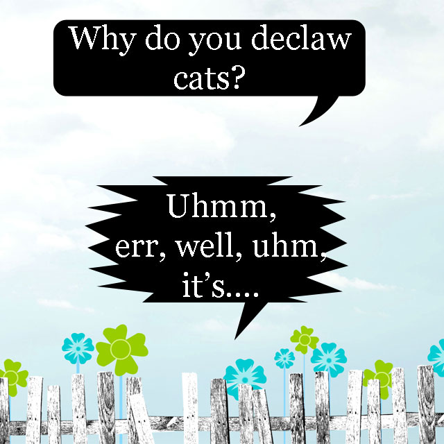 Why do you declaw cats