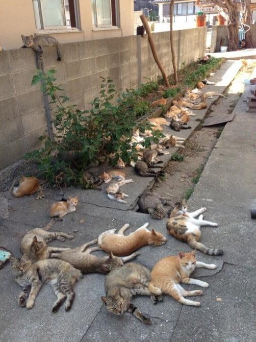 Tashirojima Japan Cat Island