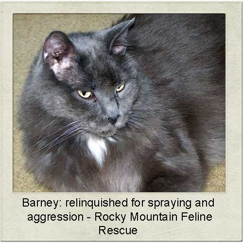 Barney a relinquished cat