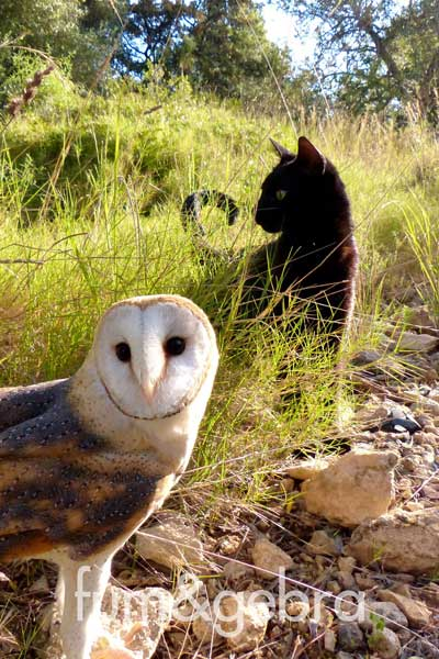 Cat and owl are close friends