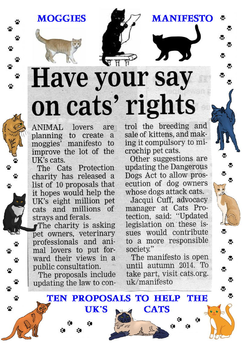 Cats Protection proposals to improve cat welfare UK
