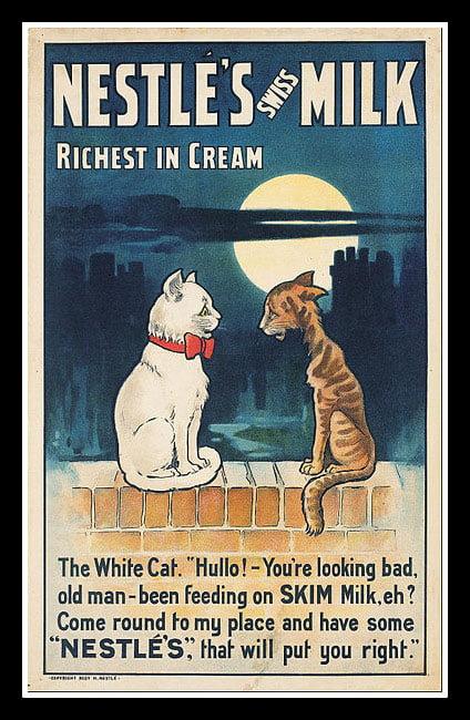 feline lactose intolerance