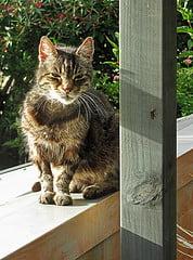 frail cat