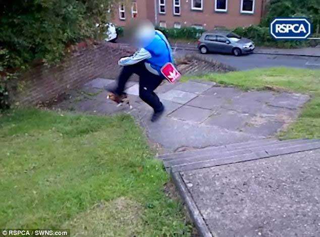 man kicks cats