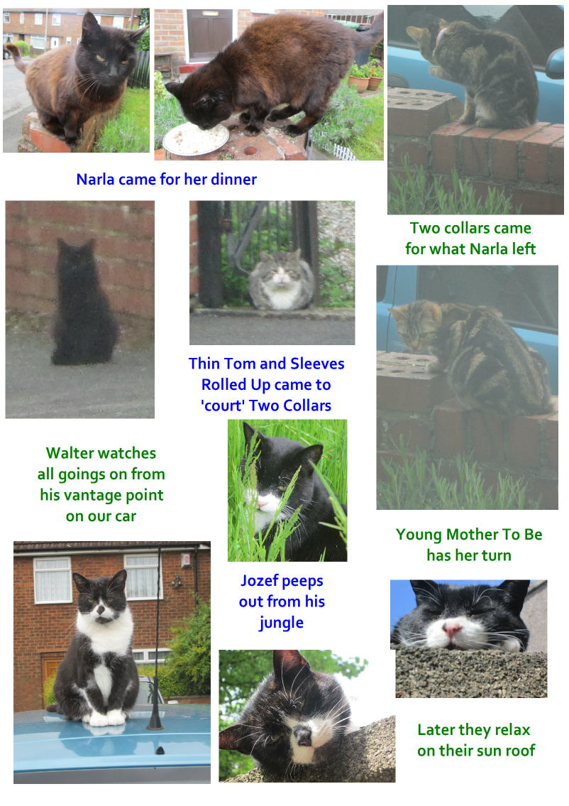 Walter a black and white cat in the UK tells us what he does