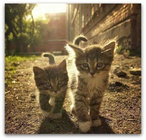 two kittens walking outside together