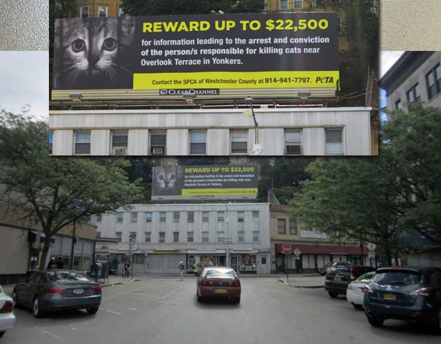 billboard advertising 22500 usd reward to help find cat killer NY USA