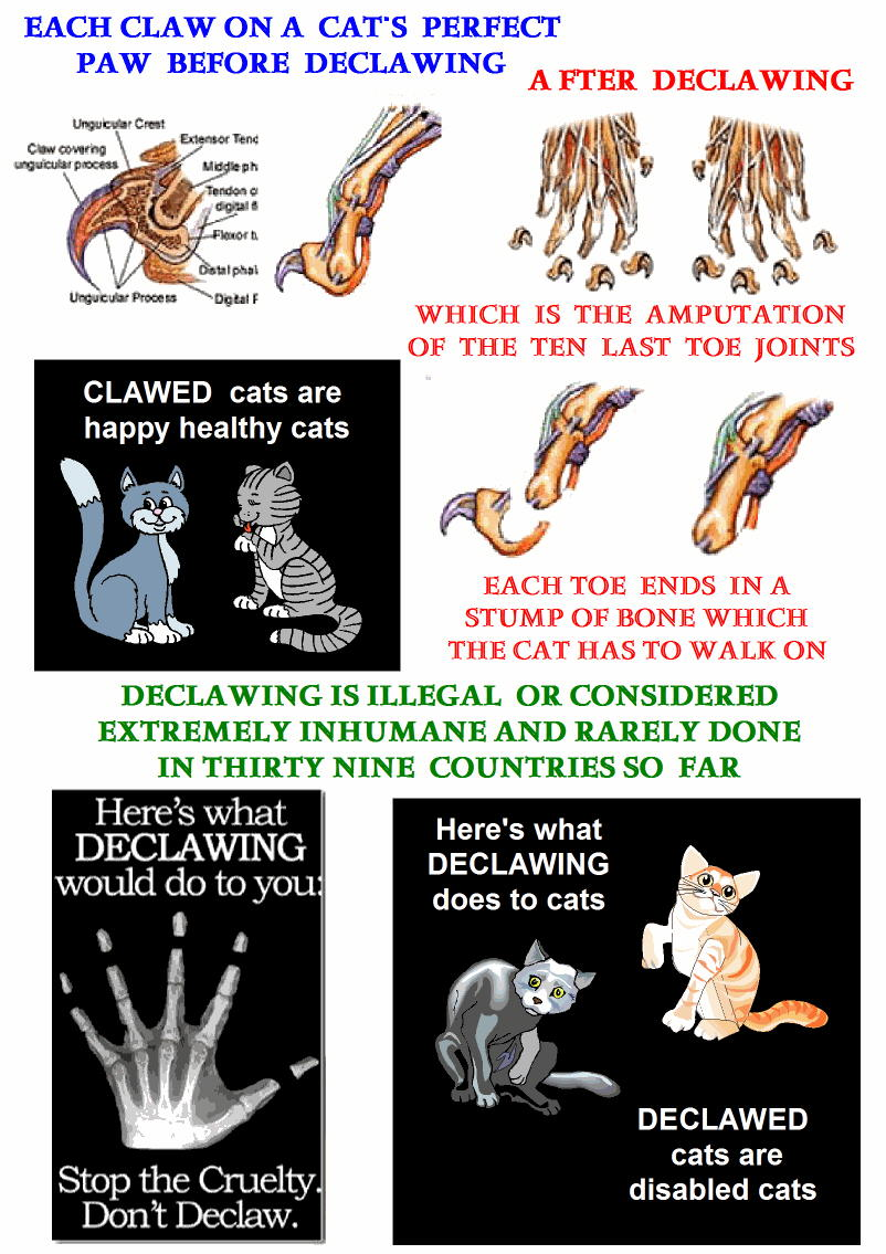 Declawing poster