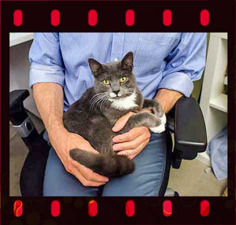 King the NY cat who was kicked has been offered a new home