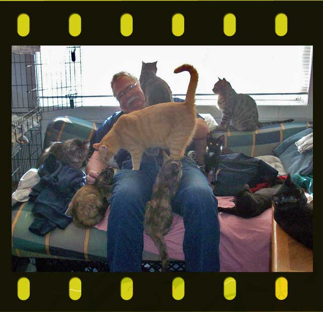 Man with nine cats