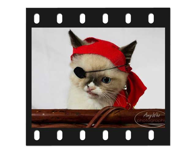 Sir Stuffington celebrity cat