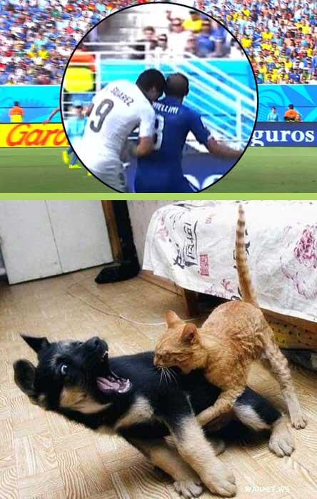 Suarezing cat bites dog