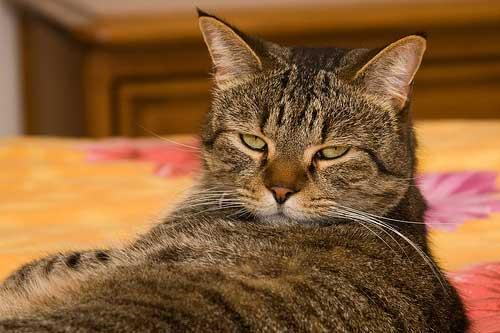 Neutered cats + anal glands + marking