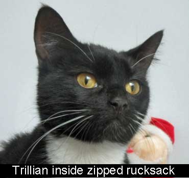 Trillian was inside a zipped up backpack left outside the shelter