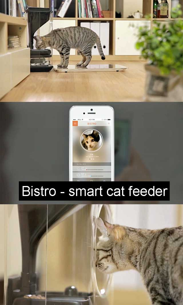 Bistro smart cat feeder