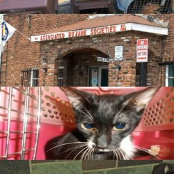 cat hoarder relinquished 42 cats