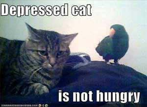 Depressed cat loses appetite but it is not funny