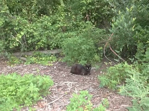 Feral cat acts as lookout to colony members