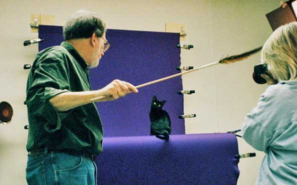 Helmi Flick photographing a Bombay purebred cat - a jet black cat