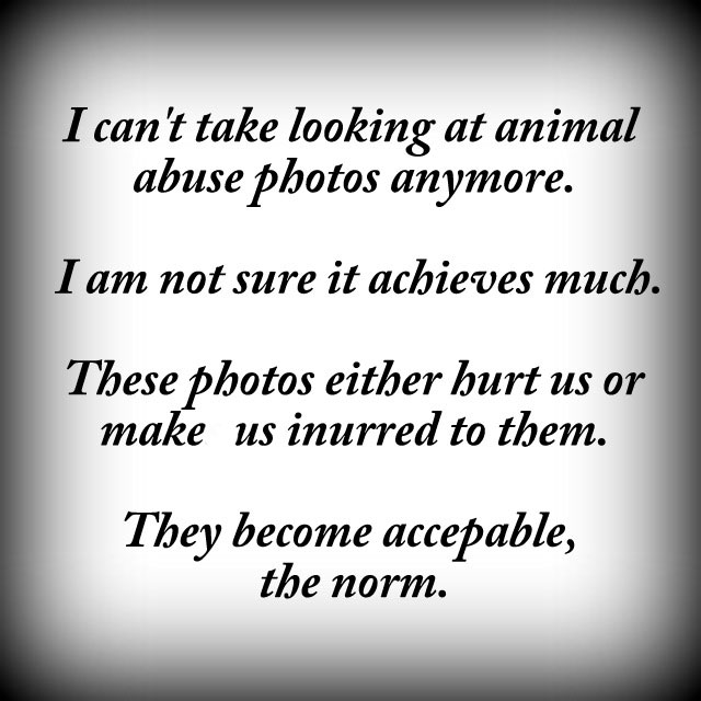 No animal abuse photos please